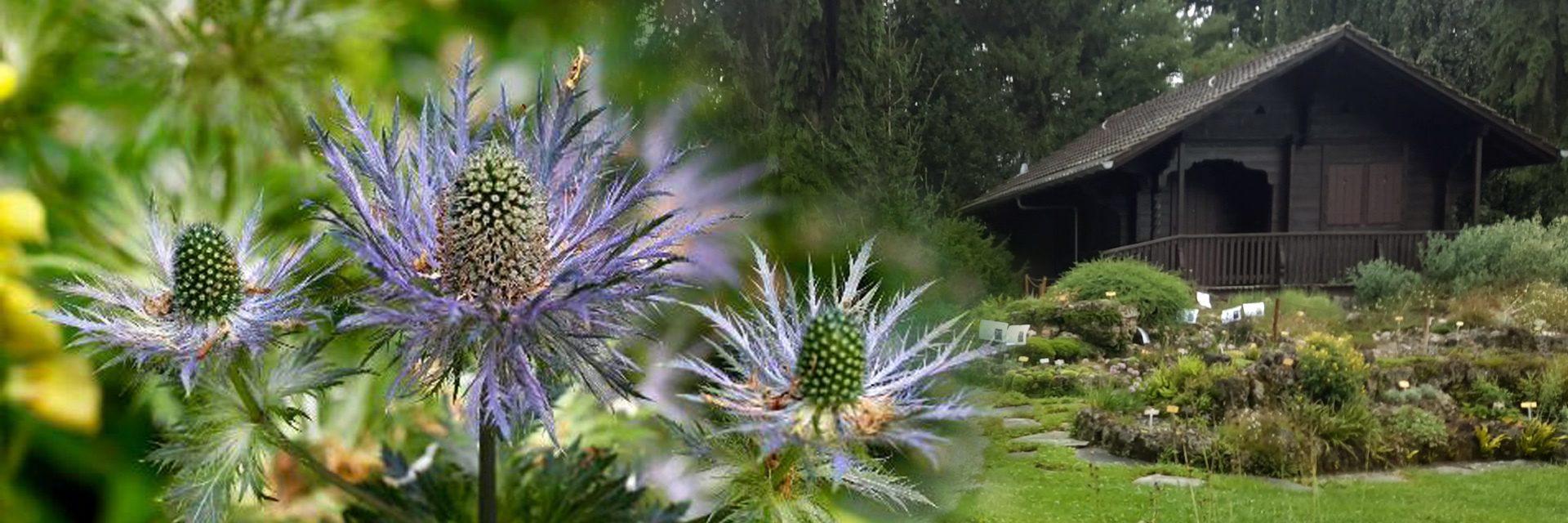 jardin-alpin-1920x640