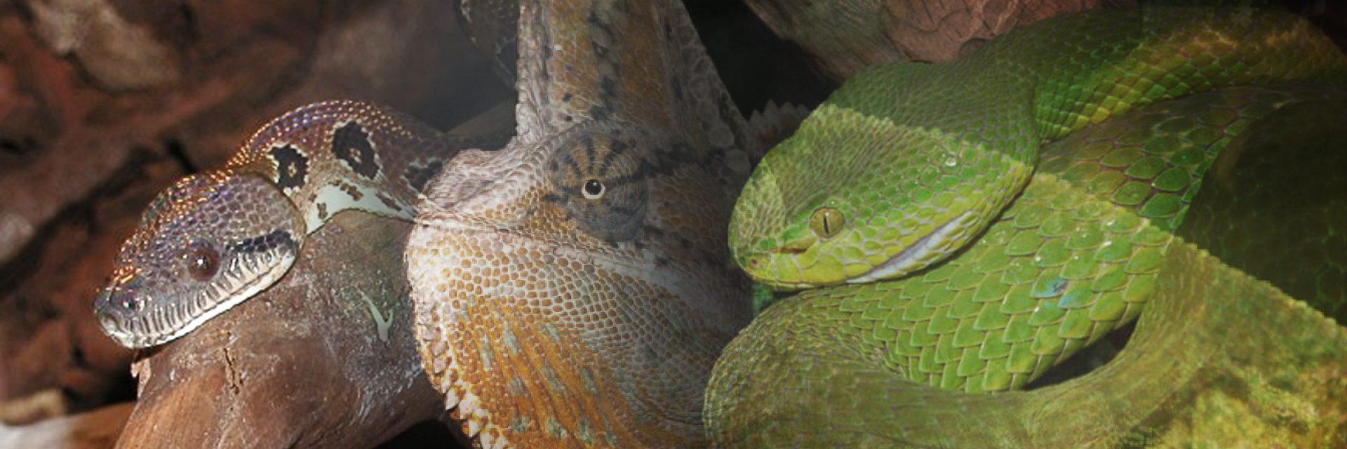 reptiles-1920x640